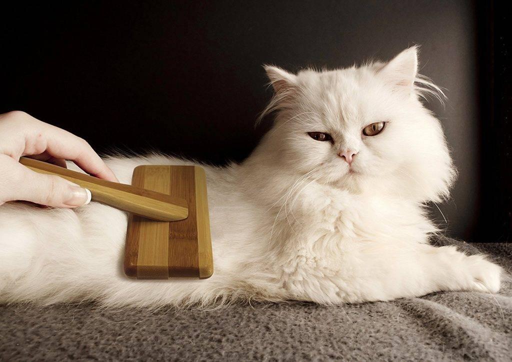 Как избавиться от кошачьей шерсти в квартире: владельцам кошек на заметку