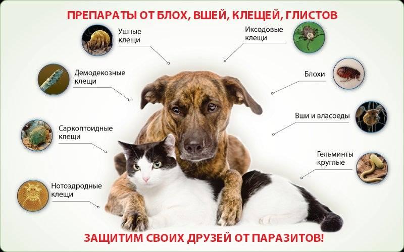 Как обнаружить и как лечить собаку от глистов