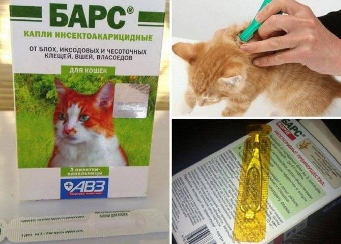 Народные средства от блох у кошек: дегтярное мыло, травы и другие, как вести ими в домашних условиях