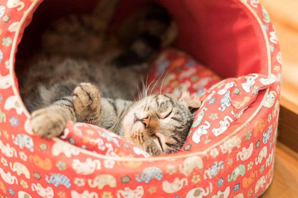 Игрушки для кошек своими руками: как в домашних условиях сделать игрушку из бумаги и коробки для кота? идеи самодельных изделий из подручных материалов для котят