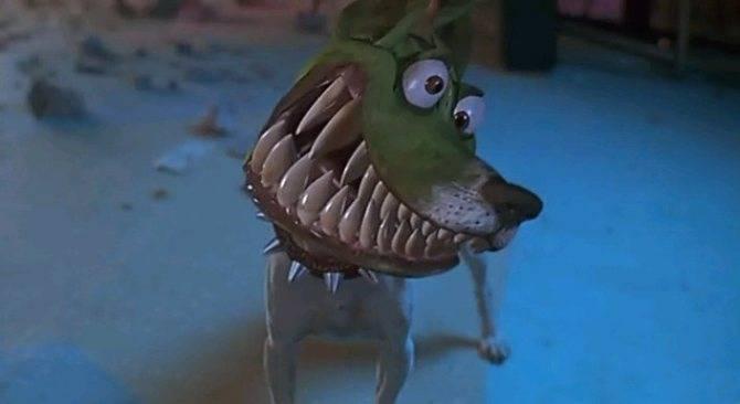 Порода собаки изфильма «маска» - майло