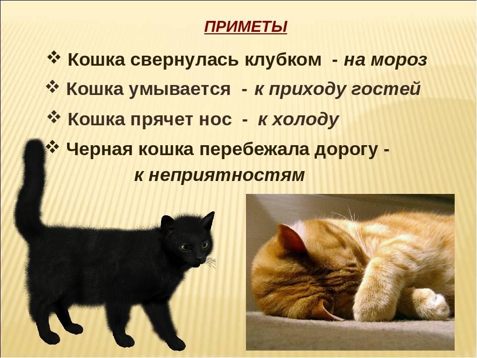 Можно ли оставить кошку одну на сутки, 5 дней, неделю, две недели? на сколько можно оставить кошку, котенка: отзывы, мнение ветеринаров