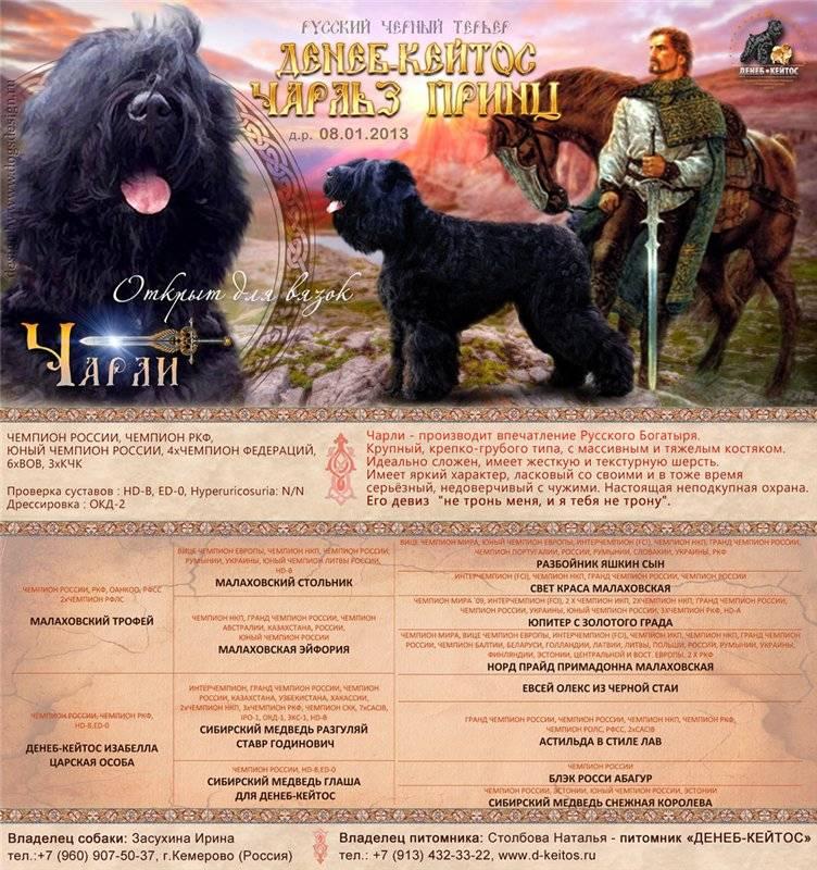 Собака большой русский черный терьер: особенности породы и описание характера