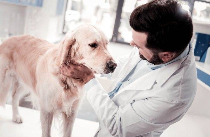 Почему собака после еды срыгивает: причины, симптомы, диагностика, лечение и профилактика