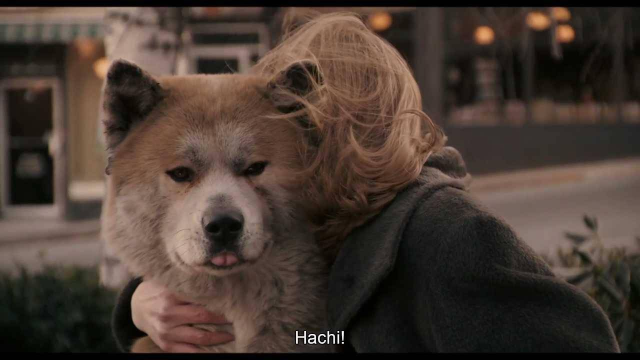 Акита-ину: описание породы, характеристика стандарта, цена, фото японских собак, список питомников + отзывы владельцев