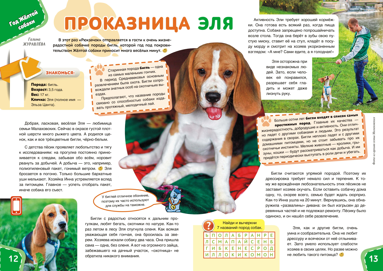 Дрессировка и воспитание щенка корги: особенности процесса