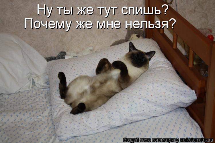Причины не будить спящих питомцев