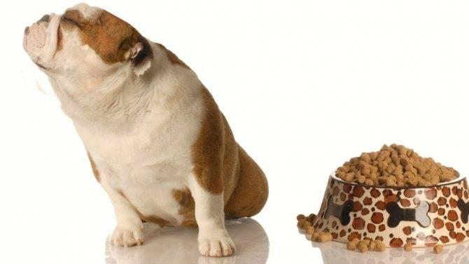 Почему собака плохо ест, но активная и что делать