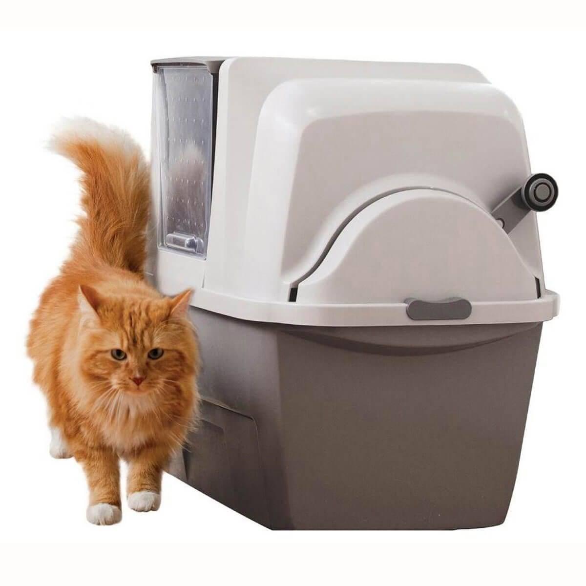 Какой лоток выбрать для кошки – типы, размеры, советы по выбору