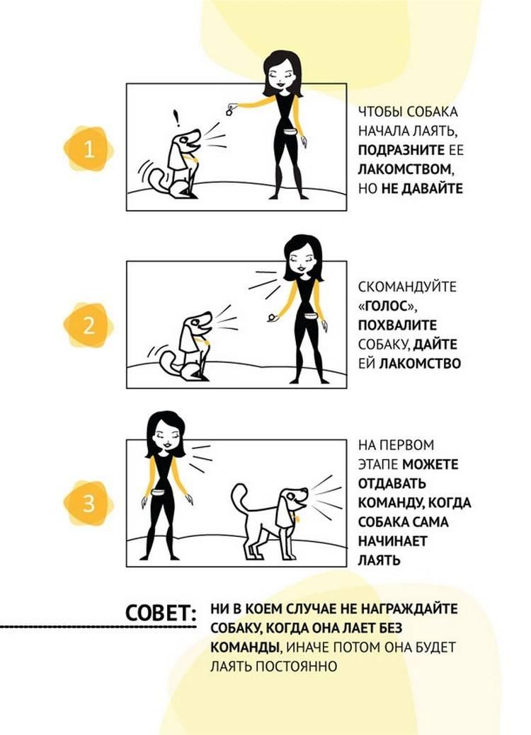 """Как научить собаку команде """"голос"""", методы обучения, советы кинологов"""