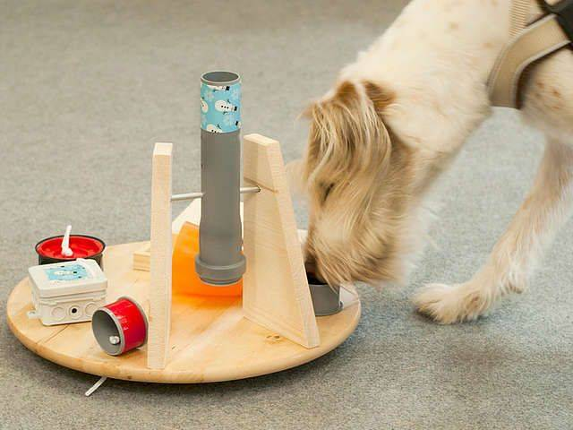 Как сделать игрушку для собаки своими руками?