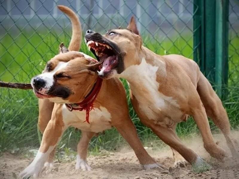 Пятерка самых жизнерадостных пород собак