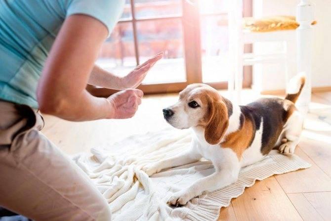 Как отучить собаку гадить в неположенном месте - на кровать, ковер, советы специалиста