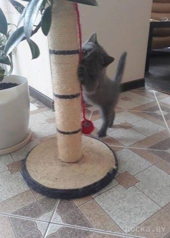 Как приучить кошку к когтеточке: экспресс-метод, модели когтеточек