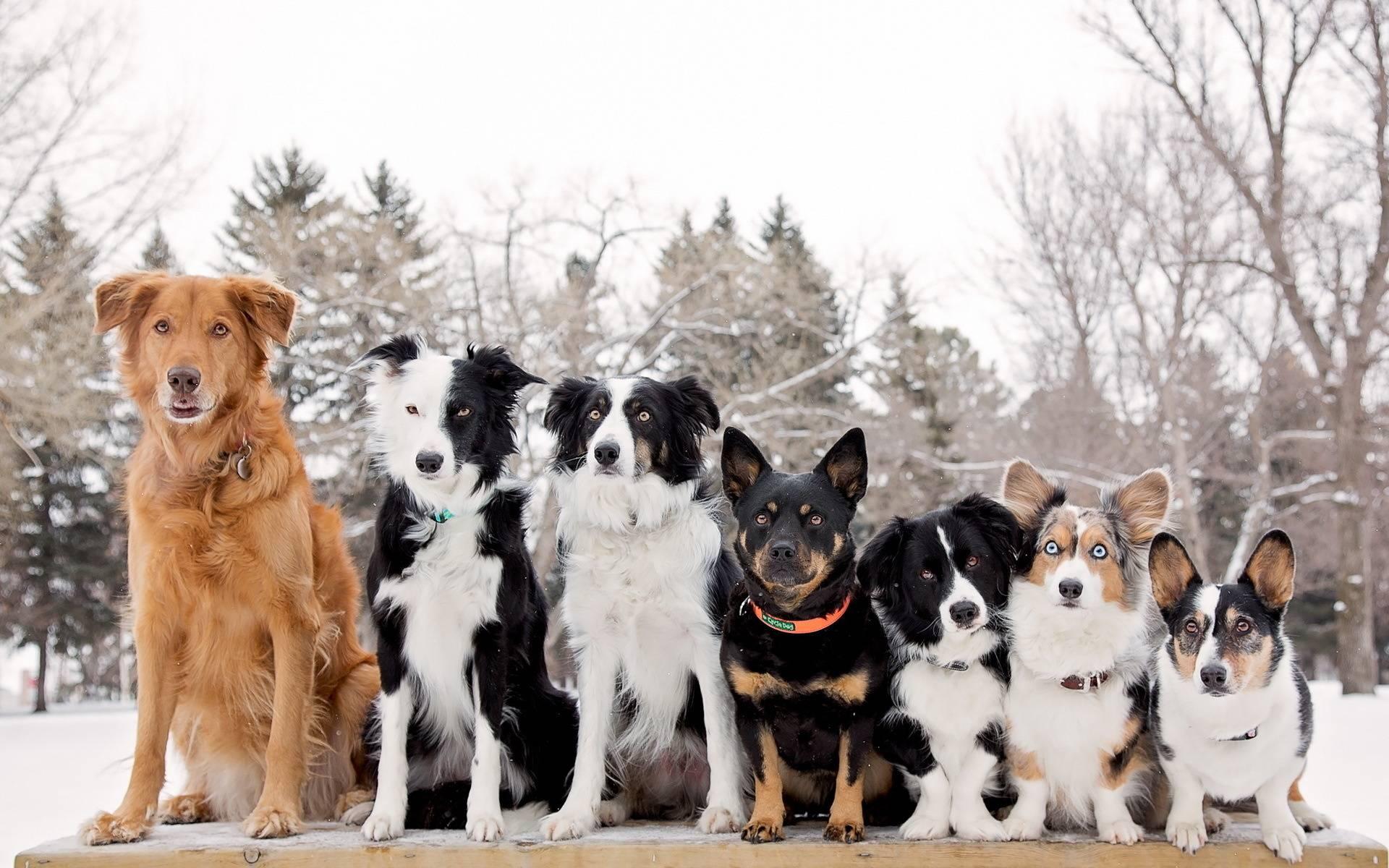 Большие породы собак, которые подходят для дома   hidogs.ru