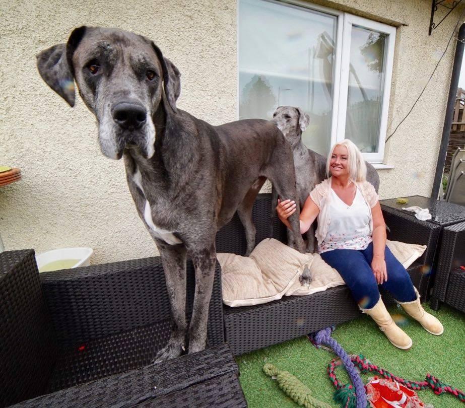 Топ самых больших пород собак