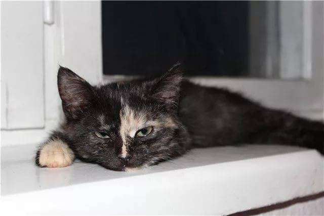 Кошка какает с кровью: симптомы и причины появления, диагностика и лечение, профилактика недуга у домашнего питомца