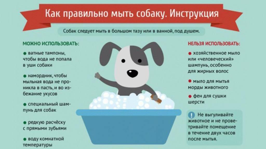 С какого возраста можно купать щенка? как мыть собаку?