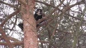 2 проверенных способа как снять кота с высокого дерева, если она уже долго там сидит