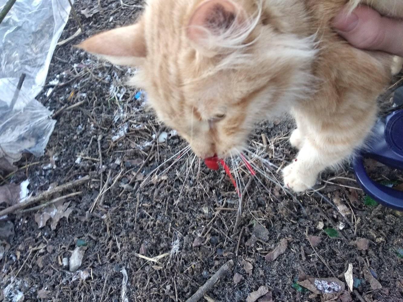 Совет ветеринара: что делать, если кот упал с высоты?