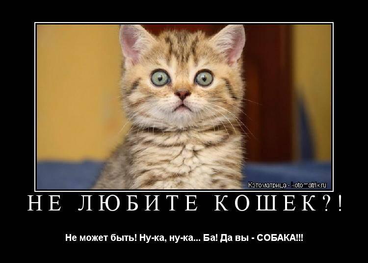 Что не любят кошки и коты, и чего следует избегать хозяевам