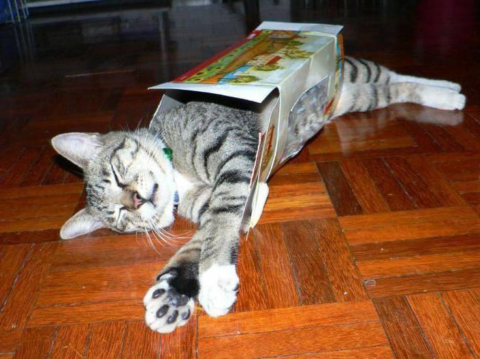 Как отучить кота или кошку лазить на стол: совет специалиста, видео