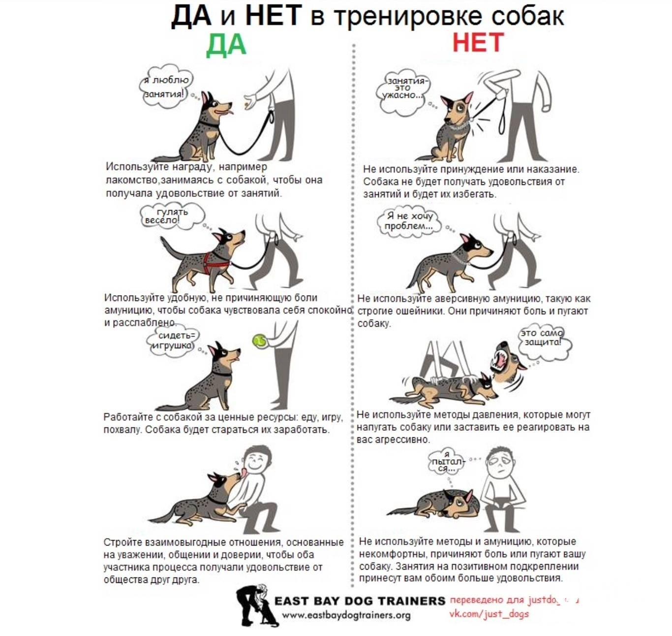 Как приучить собаку к цепи