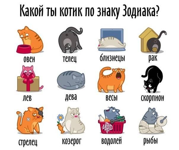 Женщины по знакам зодиака: на каких животных похожи