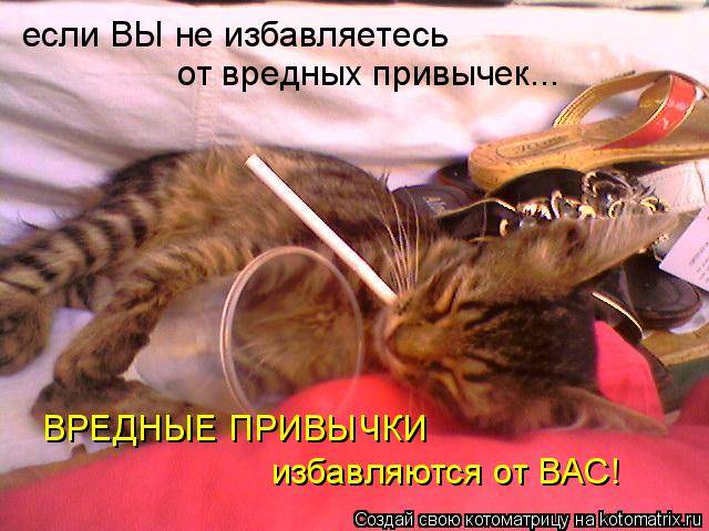 Характер кошек:  причины, поведение, особенности, что делать