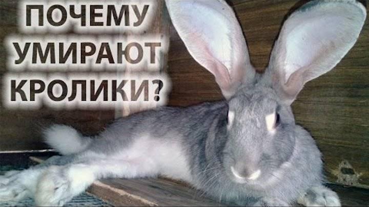 Внезапная смерть кролика и ее причины - наши лапки