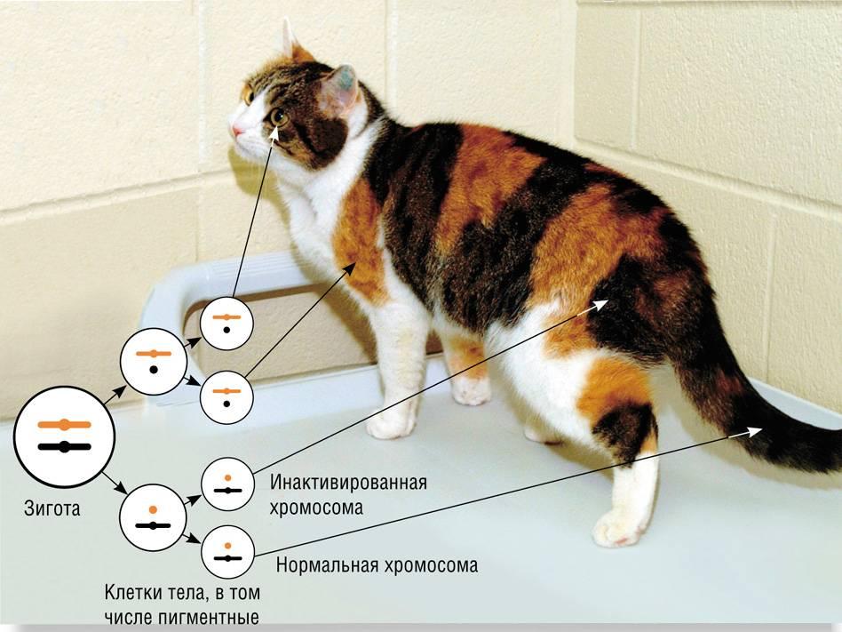 Отношения между кошками