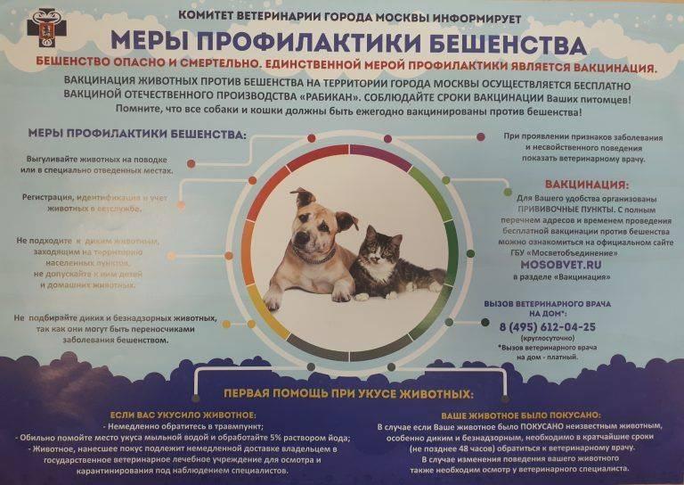 Осложнения от прививки от бешенства у кошек: почему животному плохо после вакцинации