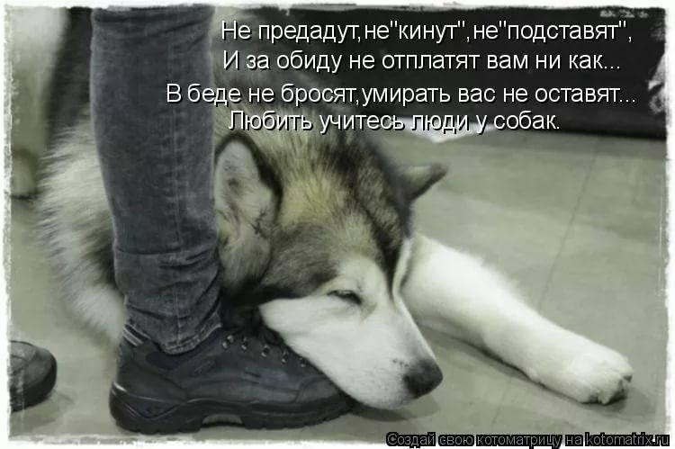 Как долго собаки помнят обиду