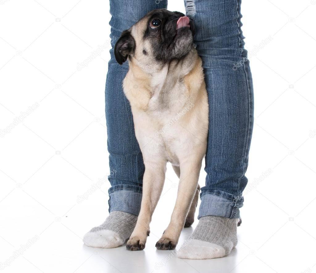 Почему собака лижет ноги? вот что она хочет этим сказать…