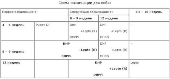 "Прививка для собак по возрасту: таблица. график вакцинации собак   нпк ""скифф"""