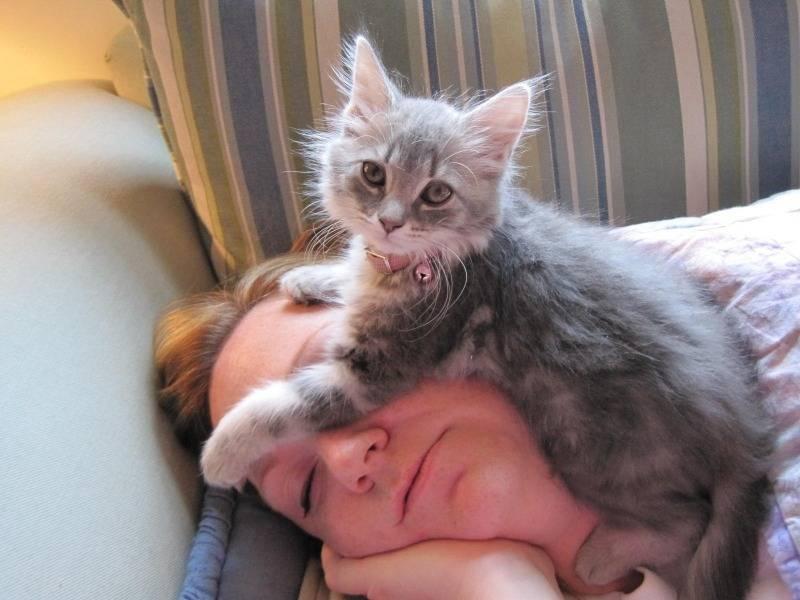 Сколько времени кошка спит в сутки?