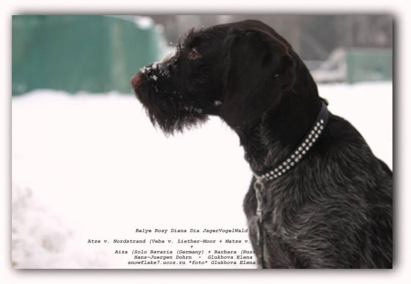 Редкие имена для собак