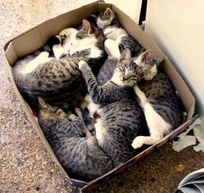 Почему кошки и коты любят коробки, причины такого поведения у взрослых животных и котят, как понять своего питомца