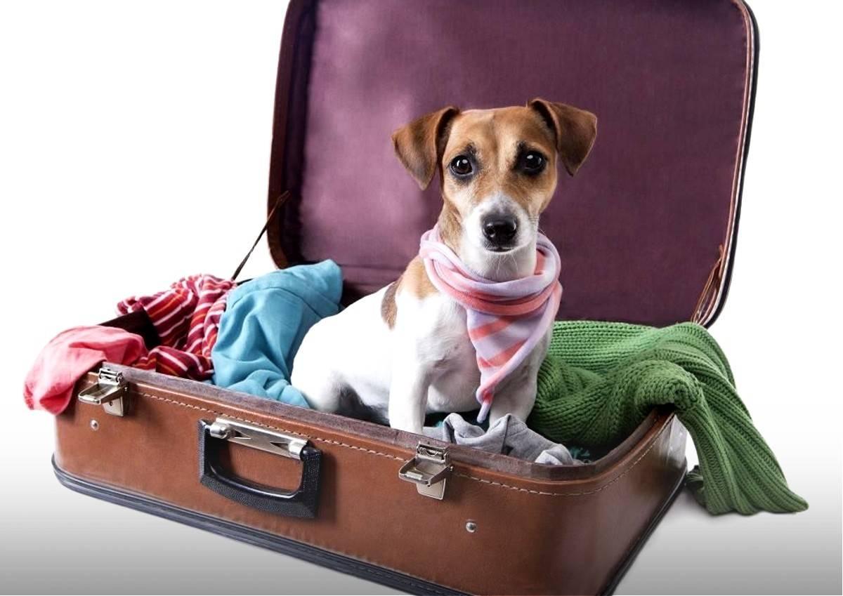 Гостиница для животных bookingcat - гостиница для кошек и собак, по низким ценам