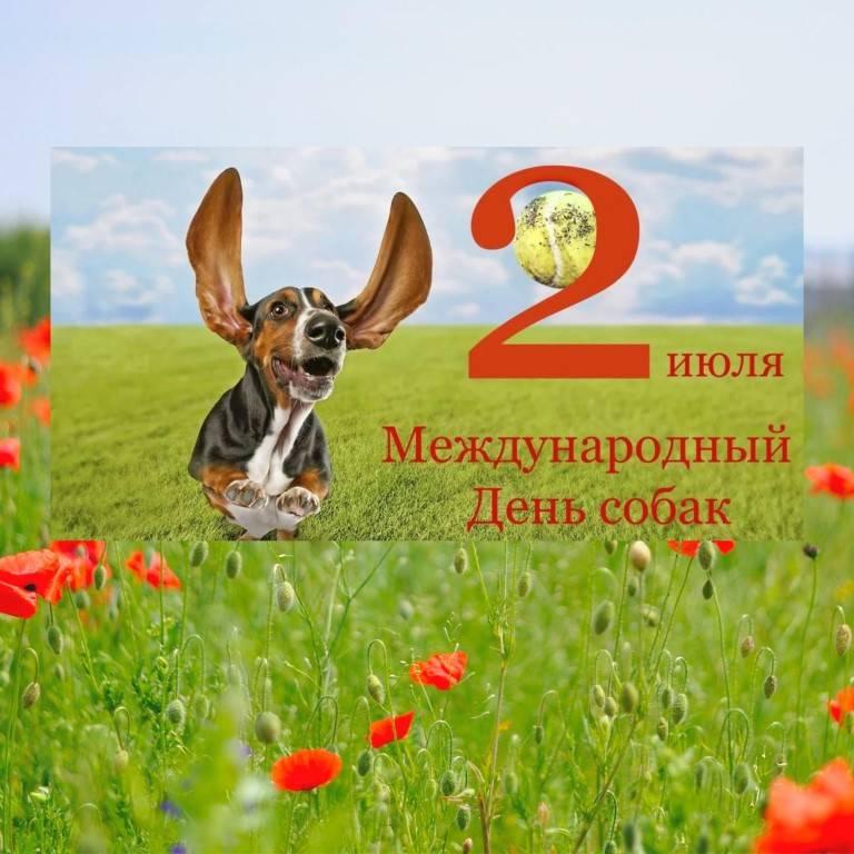 Праздники животных -  собаки и щенки