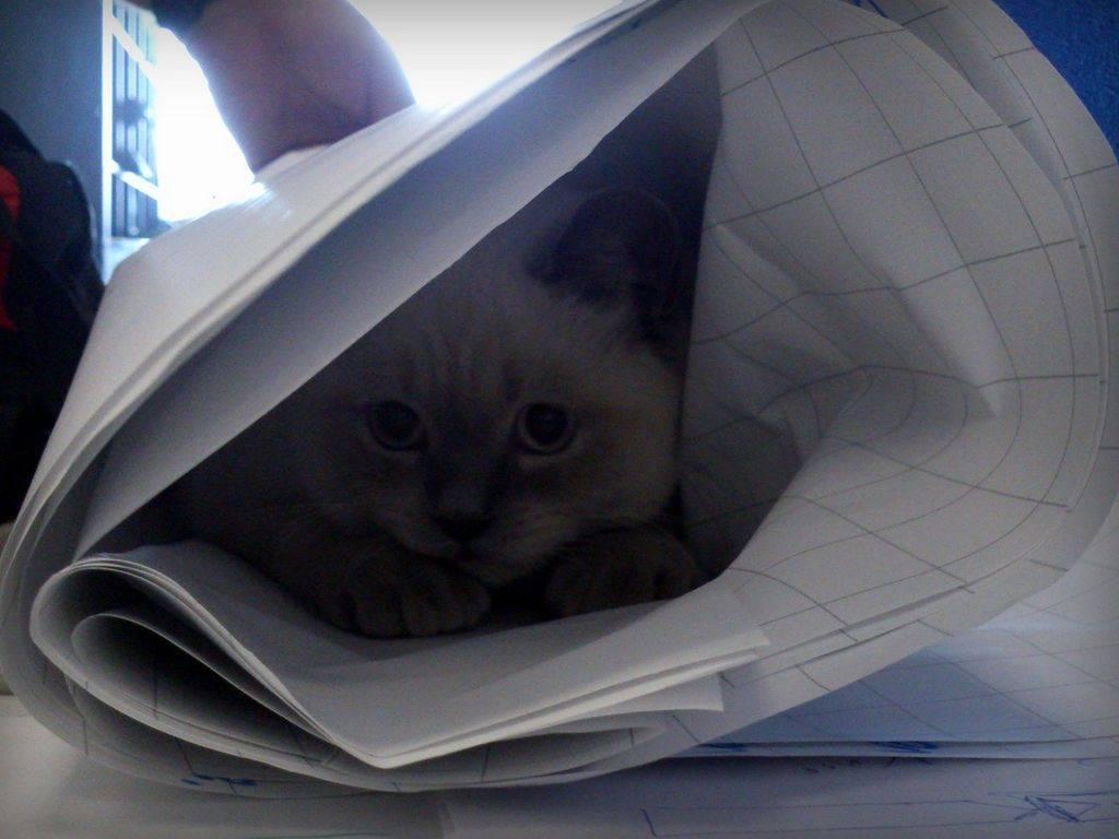 Кошка прячется в темные места - почему и что делать?