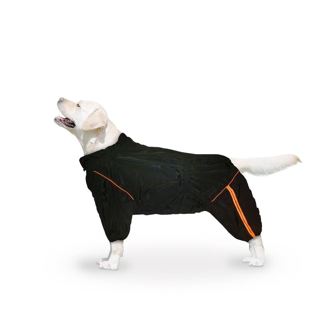Средние породы собак, их особенности, виды, названия и фото | живность.ру