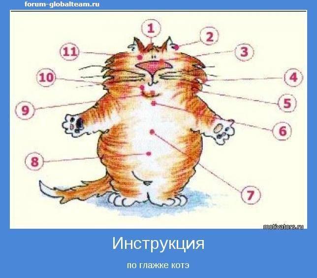 Женщины как кошки любят их гладят. как правильно гладить кошку, чтобы она была счастлива. о поглаживаниях котов посторонними