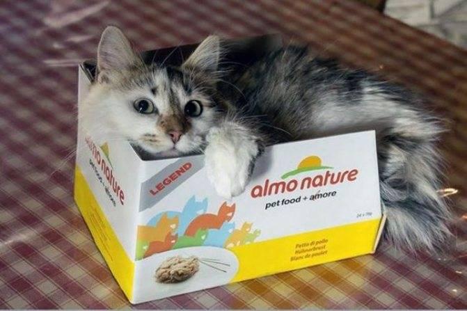 Корм для кошек almo nature: обзор, отзывы и цены корм для кошек almo nature: обзор, отзывы и цены