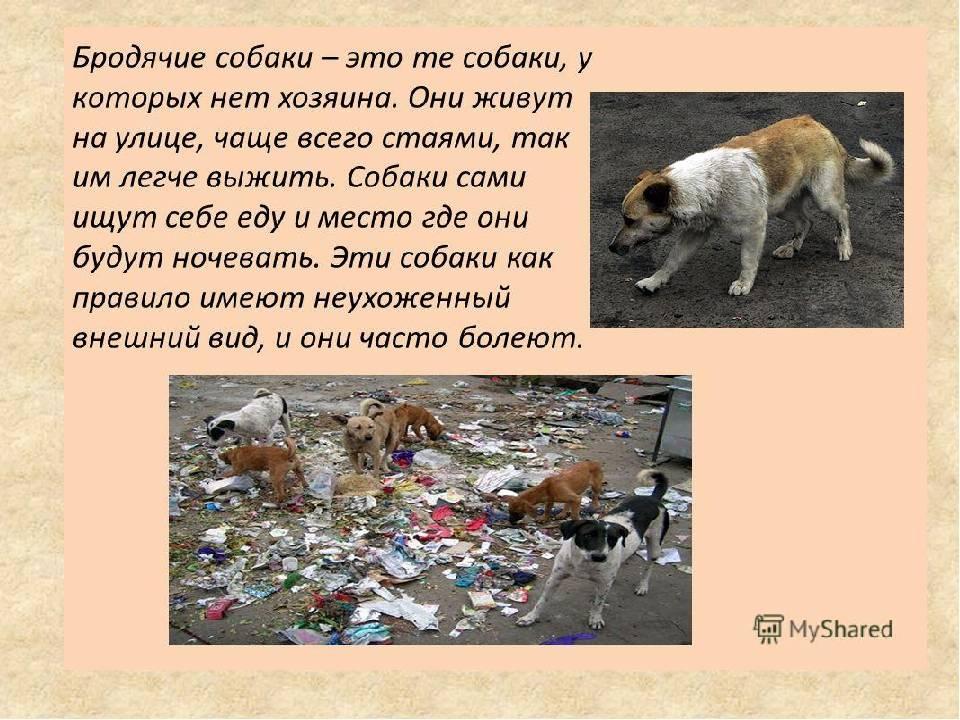 Как помочь бездомным кошкам и собакам?