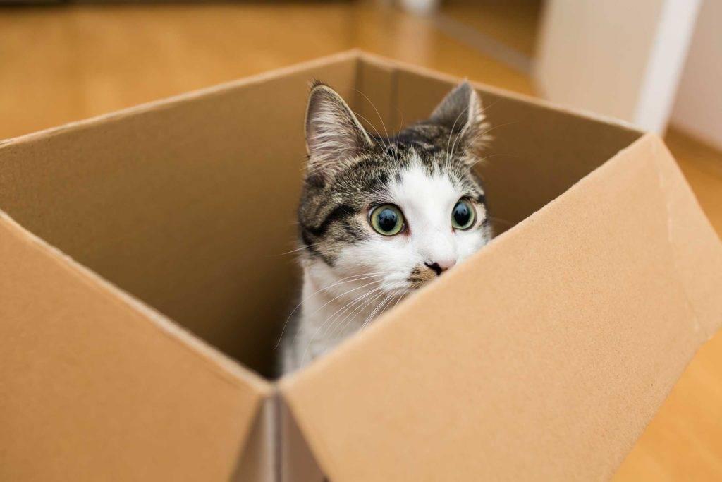 Почему коты так любят коробки - gafki.ru