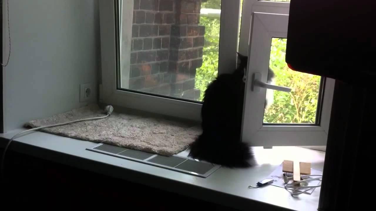«кот нашелся через 365 дней после пропажи». как искать, аглавное— найти потерянного питомца