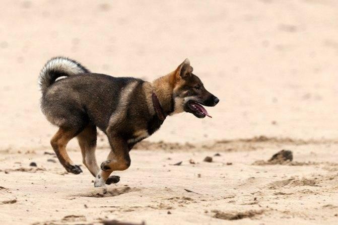 Что делать, если собака боится других собак?