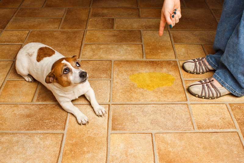 Что делать если собака гадит на кровать. собака писает на диван. почему собака писает на кровать