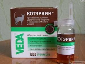 """Лекарство """"котэрвин"""" для кошек: инструкция по применению капель"""